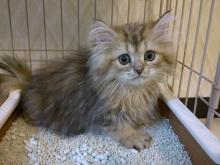 猫カフェ「cat cafe nyanny(ニャニー)秋葉原店」が8月5日にオープン! 住居跡を猫屋敷に改装