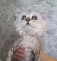 猫カフェ「cat cafe nyanny(ニャニー)秋葉原店」、1月14日にシャンプー見学会を開催