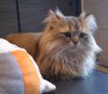 猫カフェ「cat cafe nyanny(ニャニー)秋葉原店」、6月10日にサマーカット見学会を開催