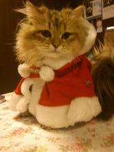 猫カフェ「cat cafe nyanny(ニャニー)秋葉原店」、12月24日にクリスマス仮装イベントを開催