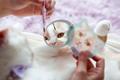 Twitterで話題!ちくわ柄の甘え猫「猫のポイップ」のメイクお手伝いぬいぐるみ&ポーチセットが2018年11月下旬に新発売!