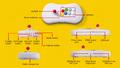 人気格闘ゲーム20作品を収録したアーケードスティック「NEOGEO Arcade Stick Pro」が登場!