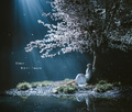劇場版「Fate/stay night [Heaven's Feel]」III、主題歌Aimer「春はゆく」 須藤友徳描き下ろしジャケット公開!