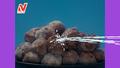 ニチレイ「特から」×ウルトラマンが本日から 7日連続でムービーを公開!合言葉は「ジュワッチ!」!