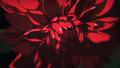 """KATE×エヴァコラボ、林原めぐみ出演の""""綾波レイが口紅を塗る""""オリジナル動画公開!"""