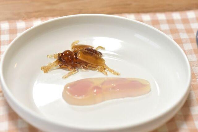 【編集部レビュー】おうちでお手軽にリアルな昆虫グミを作って遊んで、おいしく食べよう! アキバ総研編集部が「グミップルラボ ドキッとステーション」に挑戦!