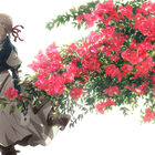 京アニ制作の「ヴァイオレット・エヴァーガーデン」完全新作劇場版、2020年1月に世界同時期公開決定!