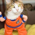 うちのペットがドラゴンボールキャラに大変身! ペット用品と人気キャラがコラボレーションした「キャラペティ」をうちの猫ちゃんに使ってもらった!