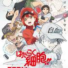 TVアニメ第2期「はたらく細胞!!」、2021年1月放送決定! PV&KV公開! 特別上映版が9月5日(土)より劇場上映開始!